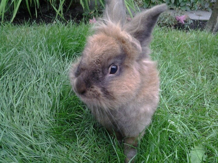 Binky mijn konijn