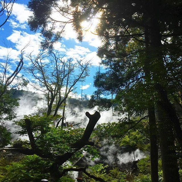 【kimagurer0613】さんのInstagramをピンしています。 《#写真 #写真撮ってる人と繋がりたい #写真好きな人と繋がりたい #風景 #日本の風景 #湯けむり #森 #箱根》
