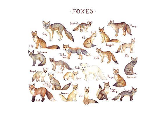 Füchse des Feldes Welt führen Stil Aquarell Fox Kunstdruck