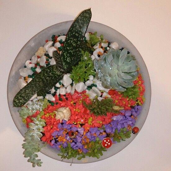 Aranjamente cu plante suculente