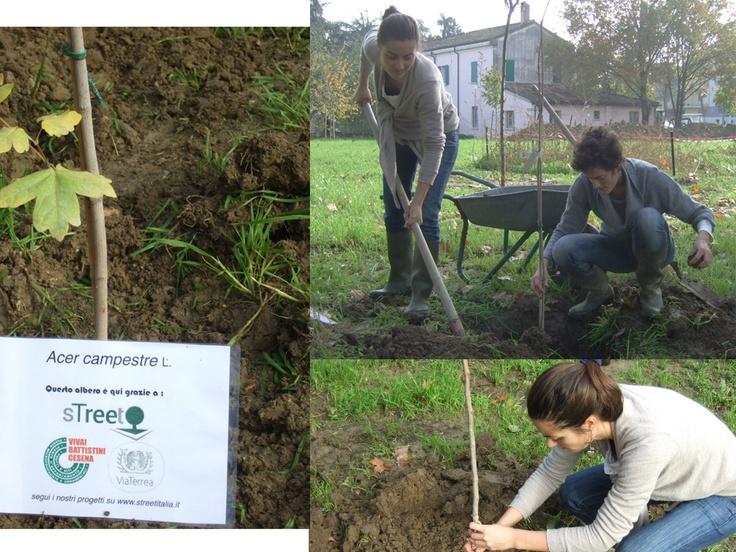 Piantare alberi in Italia con sTreet!
