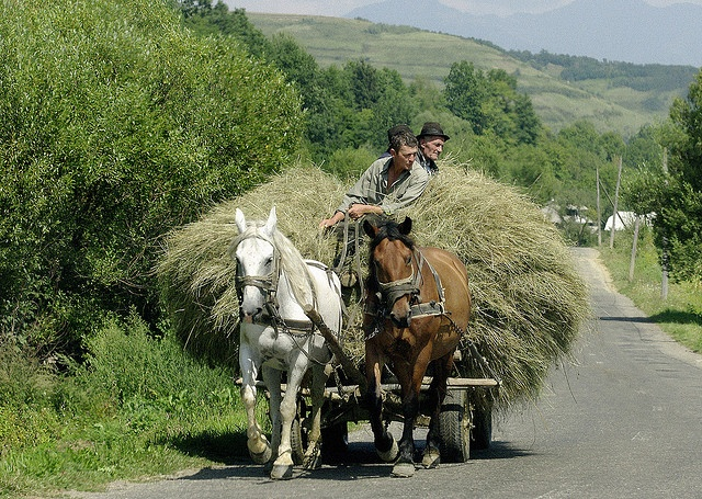 horse cart transporting animal feed, Maramures region, Romania. This is a very common sight....its like taking a step back into a fairytale time when you visit the romanian countryside.
