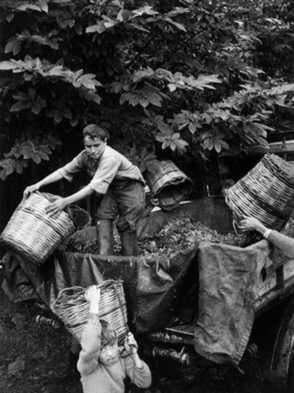 Vendemmiatori, Milo, 1963, Enzo Sellerio.