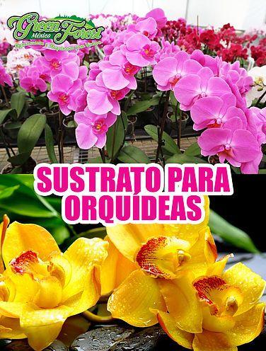 Venta de sustrato para la producción de orquídeas en sus diferentes etapas de crecimiento. Venta de maceta transparente para orquídeas. Somos distribuidores