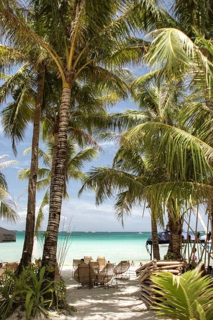 palm trees   #f21travel