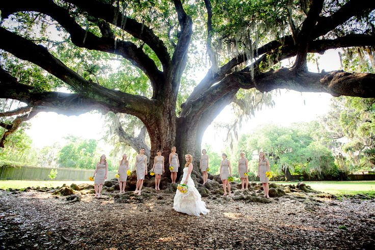 Audubon Park Tree of Life Wedding. A beautiful and free spot for a small wedding outdoors under an ancient oak./MM