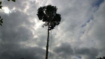 Close to the looming dark clouds... http://modernmint.co.uk/tree-surgery-essex/