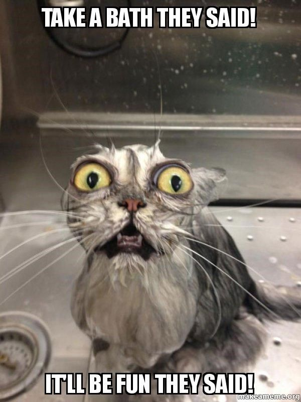 18 Times Animals Realized That Doing Something Will Not Be Fun As They Said Memes Cat Bath Cats Funny Wednesday Memes