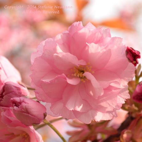 """GRATITUDE: """"Gratitude can shift our focus from feelings of rejection, worthlessness, reluctance and frustration to feelings of abundance, validation, happiness and love."""" - Stefanie Neumann on #HeartsJourney 