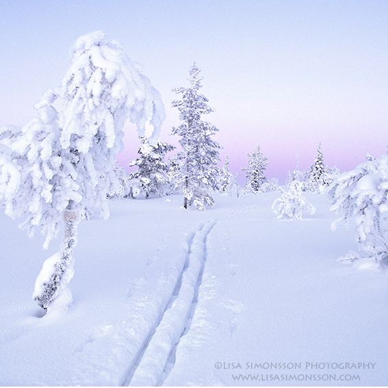 The mountain of Jämtland, Sweden.