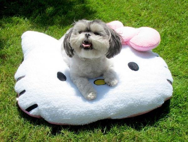 190 Best Pets Amp Pet Tips Tricks Images On Pinterest Dog