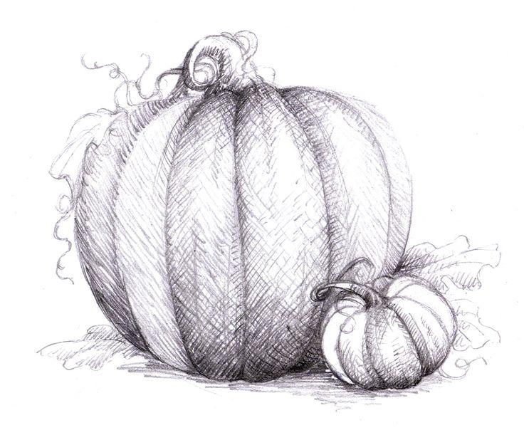 pumpkin drawing. crosshatching value drawing pumpkin p