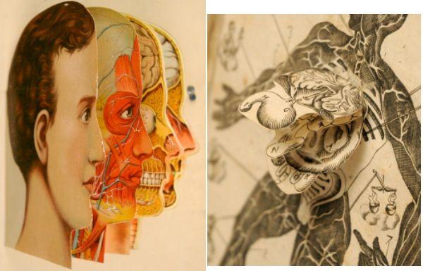 animated anatomy