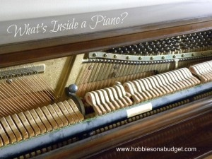 Have you ever looked inside a piano?  It's an amazing discovery zone!