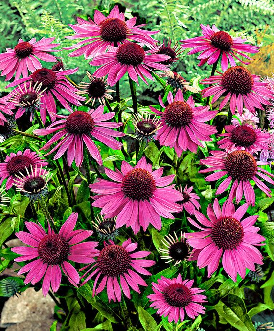 Der Sommer ist ja nun leider schon wieder fast vorbei und der September naht. Für uns genau der richtige Zeitpunkt, um euch mal die Topseller aus unserem Onlineshop zu zeigen. Natürlich haben wir für euch genau die herausgepickt, die dann auch im September blühen. Unsere Top-5-Gartenpflanzen für den September Da sind doch einige wunderschöne Exemplare, …