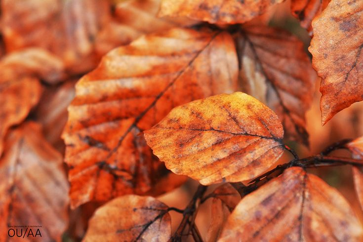 Orange leaves by Oana Unciuleanu. For more inspiring photography and art novelties, visit www.oanaunciuleanu.com and subscribe to Oana Unciuleanu Art & Architecture on FB. #art #artwork #creative #myart #onlineart #photo #photodaily #photoday #photoftheday #photogram #photograph #photographer #photography #photoofday #photooftheweek #photos #photosession #photoshare #photoshoot #photoshoots #photoshot #artsy #composition #femaleartist #picture #pic #cool #fun #picoftheday #myphotography