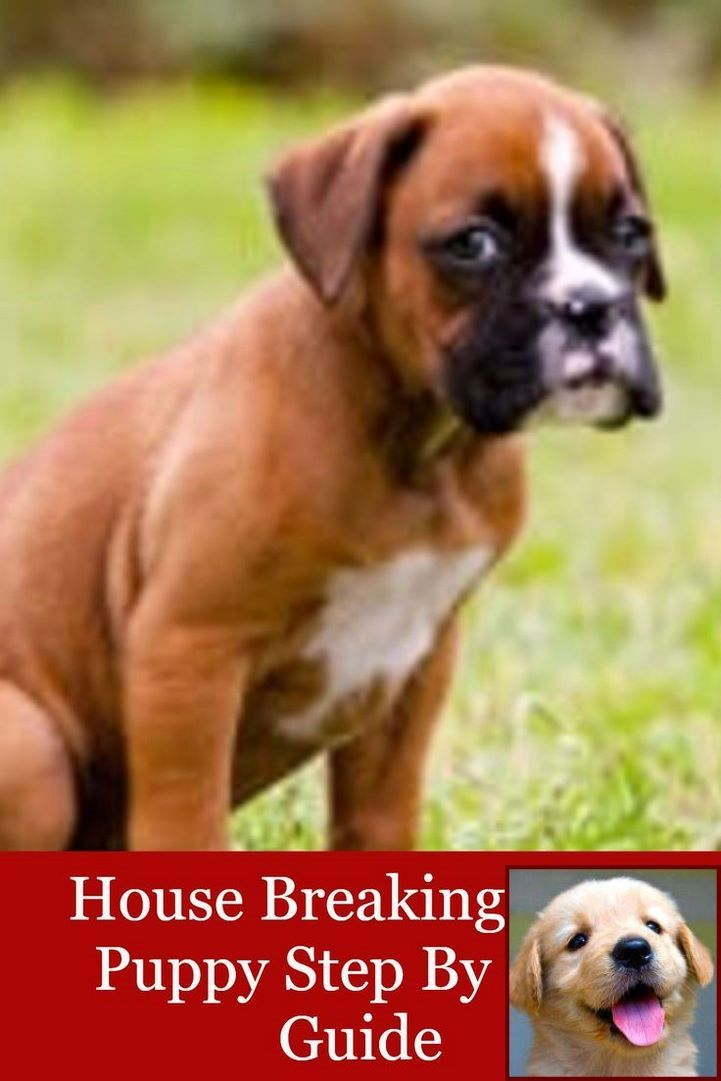 House Training A Puppy In 7 Days And Dog Trainer Courses In