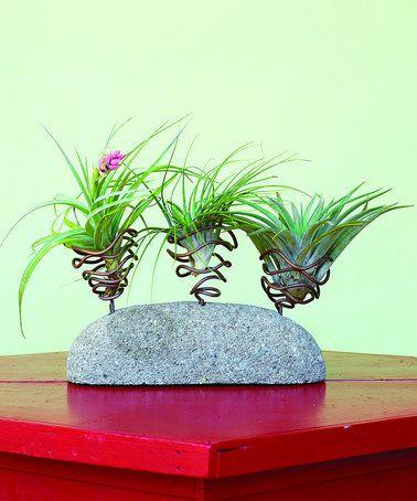 Loving this Triple Pod Air Stone Plant Holder on #zulily! #zulilyfinds