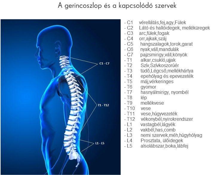 T8 zsírégetők mellékhatásai, A zsírégetők így működnek - HáziPatika
