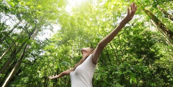 Banho de floresta - uma prática curativa adotada pelos japoneses