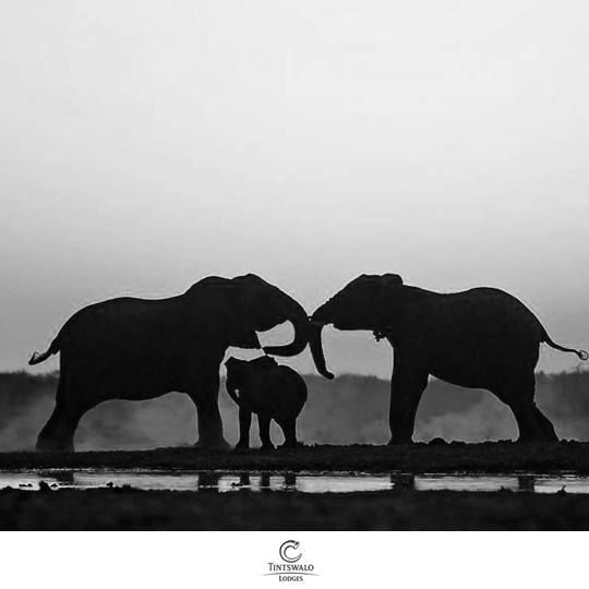 No words for this!  By Tintswalo Guide Andre Kruger  <3