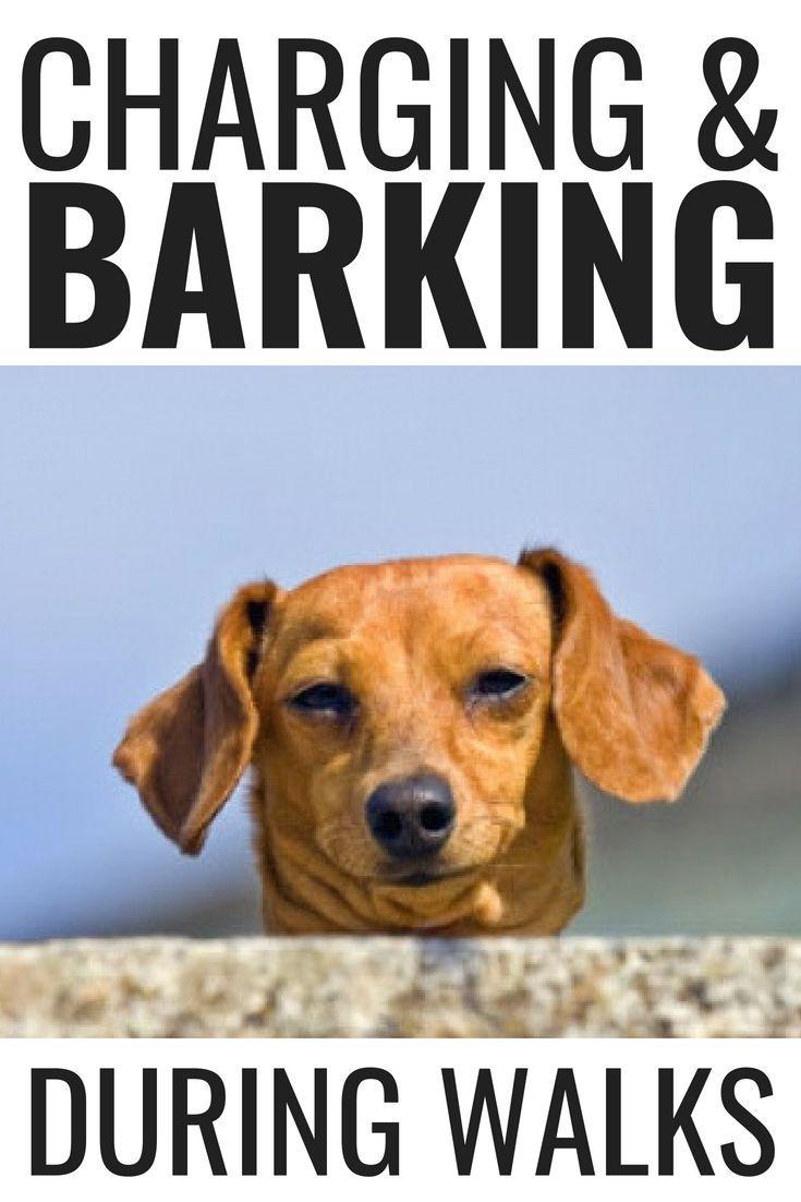 Charging Barking During Walks Puppy Barking Dog Training Tips