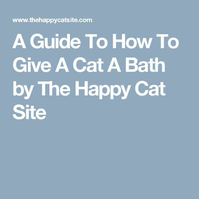 A Guide To How To Give A Cat A Bath by The Happy Cat Site