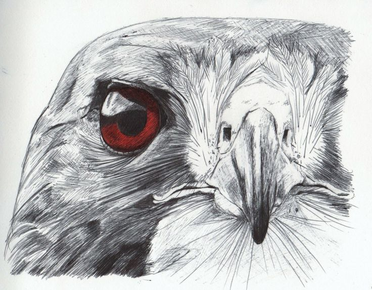 Ballpoint pen drawing, with a bit of coloured pencil for the eye.  Can't remember what sort of bird this is, or where I took the original photo :-D