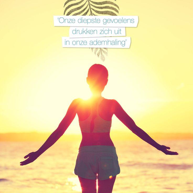 De dag beginnen door het zonlicht te begroeten, je hele lichaam strekken en nieuwe energie op te doen. De Zonnegroet is, naast een complete work-out, een fijne manier om wakker te worden.