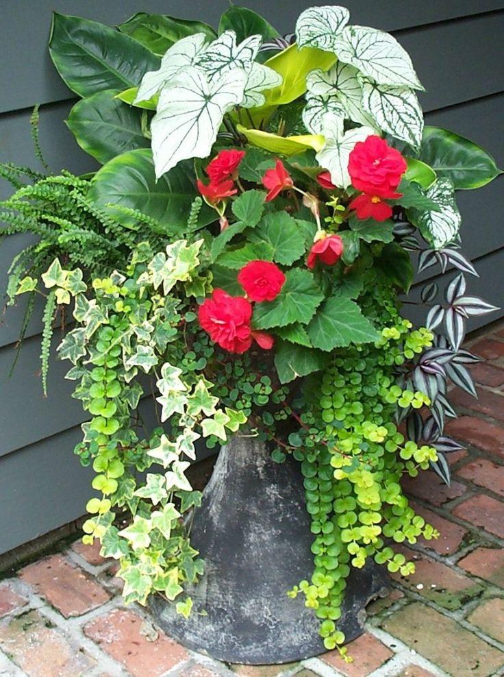 Beautiful container combo: caladium, ivy, wandering jew, begonia, creeping Jenny, and more.
