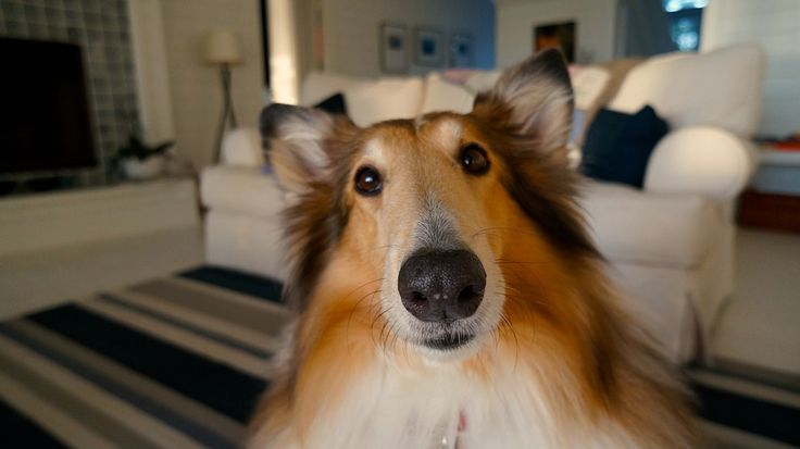 개, 애완 동물, 귀여운, 강아지, 조금, 행복한, 명랑, 질문, 행복, 가족, 함께, 사랑, 연주