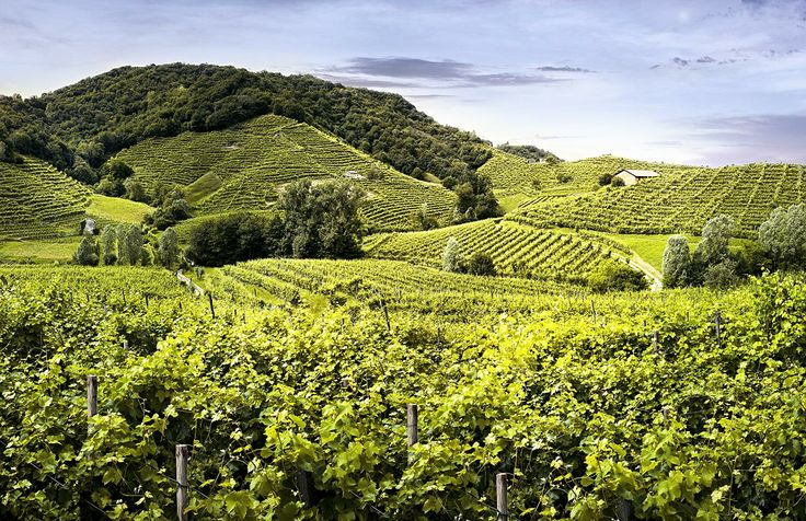A breathtaking view of the #Prosecco #hills around #CastelBrando. The beauty of the #nature meets the know-how of the #farmers to create an excellent #wine. #veneto