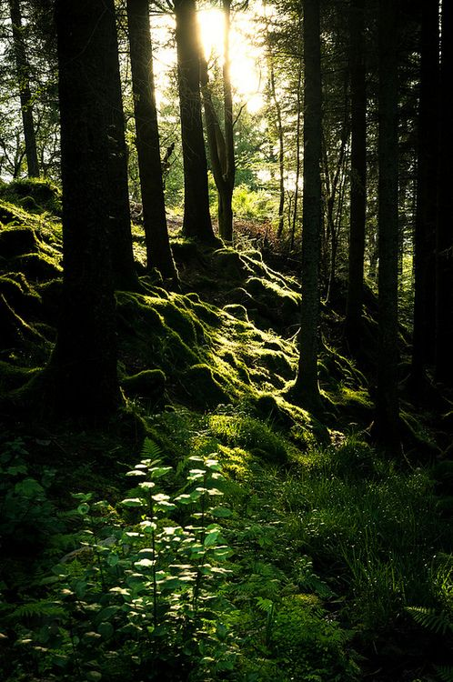 The moss grows thick over the ground here...