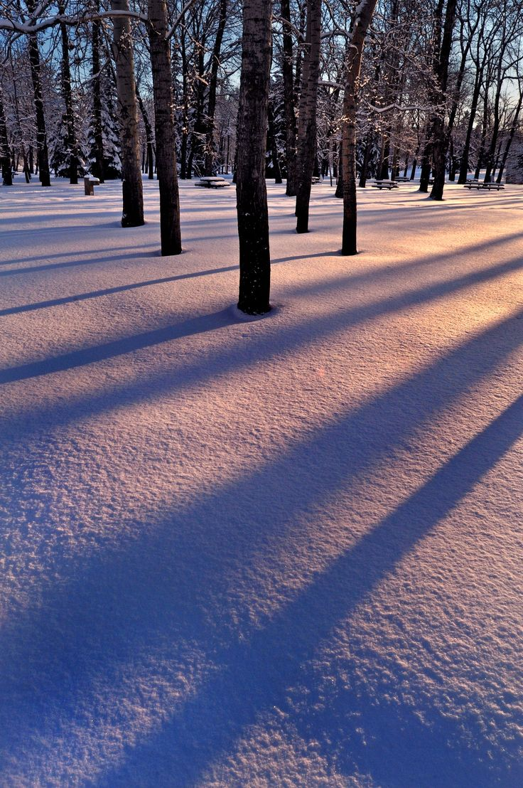 """Winter at Prince's Island Park - Check out my coffeetable book, """"MOMENTS OF LIGHT: Thirty Years of Photography"""": <a href=""""http://bit.ly/JTNnMX"""">bit.ly/JTNnMX</a> For more photos like this, check out <a href=""""http://www.frankkingphotos.ca"""">www.frankkingphotos.ca</a> Nothing like an overnight snowfall to transform a park into a glorious wonderland. I visited this downtown park, in the western Canadian city of Calgary, for about two hours and came away with all kinds of """"keepers"""". Tripod…"""