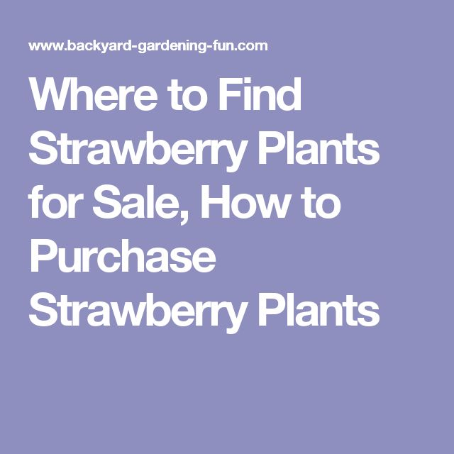 Where to Find Strawberry Plants for Sale, How to Purchase Strawberry Plants