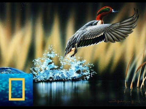 [National Geographic Channel] Wild discovery animals channel-Wildlife An..