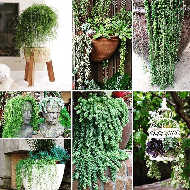 The 25+ Best Hanging Succulents Ideas On Pinterest