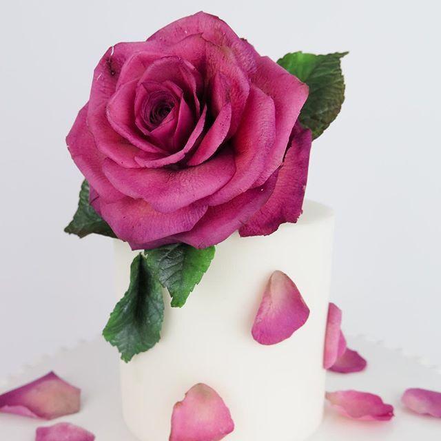 Sugar Rose, entirely edible. By edible artist and educator Emmy Roberts of Cake Bijou in Byron Bay Australia Gumpaste flower