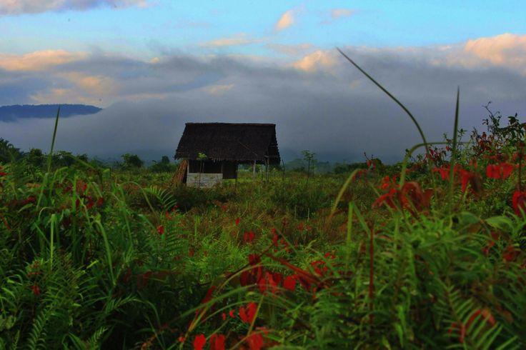 Perkebunan di Koda, Kendari, Sulawesi Tenggara, Indonesia