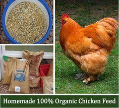 Homemade Organic Chicken Feed Recipe - 100% organic, non GMO chicken feed. No corn or soy! :)