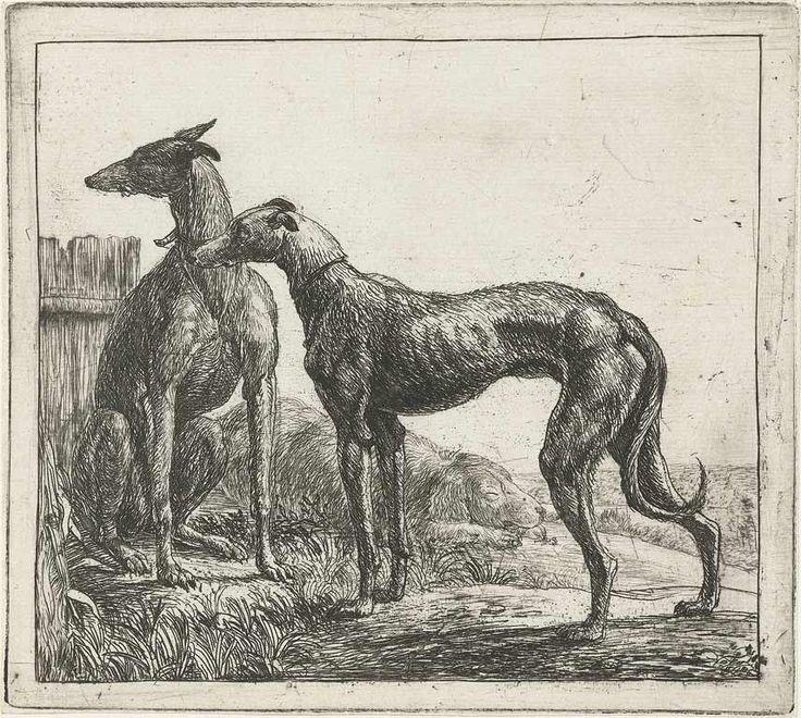 Greyhound...Simon de Vlieger, 17th Century etching.