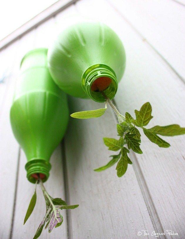Hængende-tomatplanter #terasse-tomater