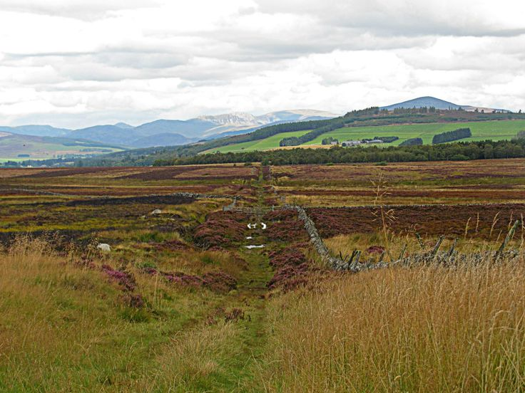 Scottish highlands'n'heather