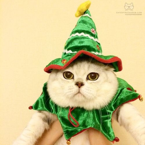 """From @haru_thecat: """"Actually I'm a reindeer who had..."""