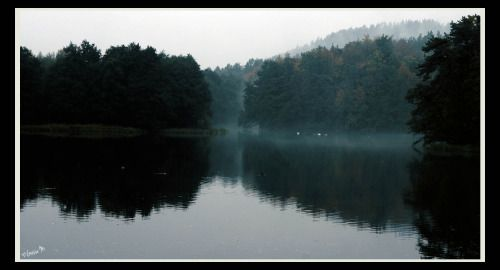 by ♡Gosia M more: http://xgosia-mx.tumblr.com   &   https://www.facebook.com/gosiamphoto  #lake #gosiam #view #forest #wood #fog