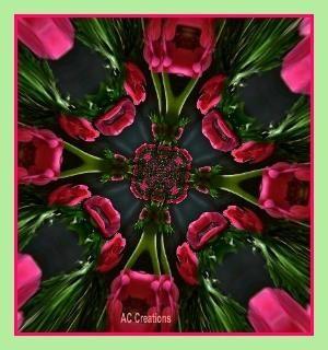 fractal by trina