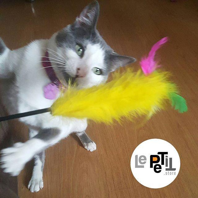 Los #gatos juegan con las plumas que encuentras en nuestra #tiendaonline ➡LePETit.store ¿Qué esperas para regalar una a tu #mascota?  #tiendaderegalos #accesoriosmascotas#quieroamimascota #mascota #mascotas #quieroamigatofeliz #gatos #gaticos #gatico #cachorros #tiendaonline #gatoslindos #gatosdeinstagram #amomigato