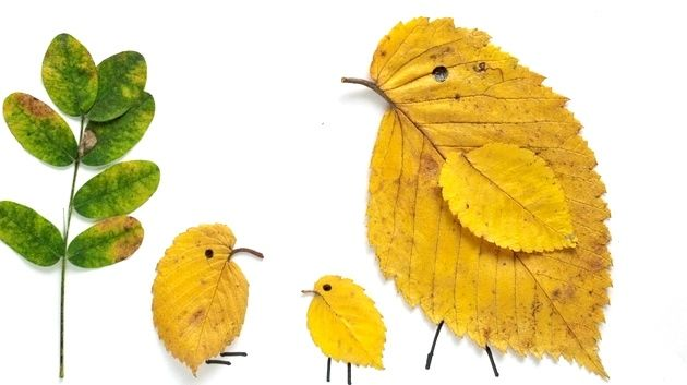 A great idea to tie Botany to Zoology, and to celebrate Fall and creativity! Create pictures using the natural shapes and colors of leaves...it's like finding pictures in clouds, but you can hang it on your wall