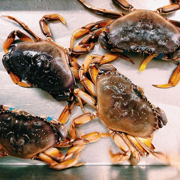 Savory Saturday: How to Cook Crab