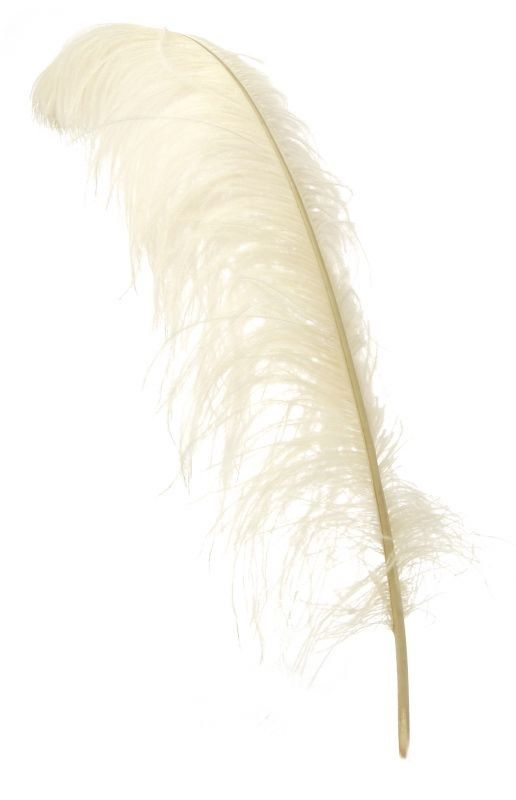 Feather from Miss Etoile
